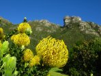 Visit Kirstenbosch Gardens a few kilometres from us