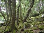 Moss Walk