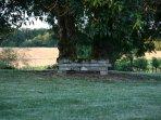 Un coin tranquille dans le parc