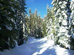 The Dorrington / Big Trees area can receive heavy snowfall in winter months