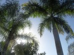 Beautiful palms trees in the house garden.