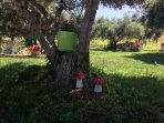 Decorating the olive trees