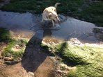 Local dog benji,chaises baby fish in the rock pools,a minute from your door!