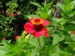 Mundo Maya Spanish School Garden