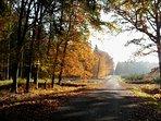 la route en automne vers la maison