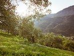 Olivos, almendros, sierra de Grazalema. Senderismo de lujo. Casa-Molino: El Molino del Panadero