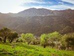 Olivos, almendros, Sierra de Líbar, senderismo de lujo desde Casa-Molino: El Molino del Panadero.