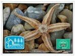 A starfish found on the beach.