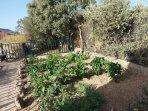Huerto ecologico para aprovechamiento de los huespedes segun temporada