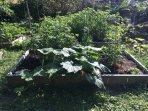 Big yard with outdoor vegetable garden in the summer.