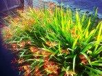 Summer plants in the front garden