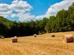 Le domaine, vue sur nos champs