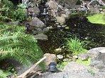 Relax around the fish pond