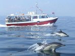 The Mevagissey to Fowey ferry runs throughout the summer months ... dolphin escort not guaranteed!!