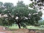 Large Shady Oaks on Property