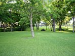 Huge Back Yard Shaded by Pecan Trees