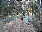 Groomed Walking Trails