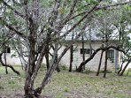Peaceful Home on 1 Acre of Hill Country Land