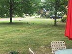 Mamma turkey and her babies came to visit the Farmhouse Cottage! Come see all kinds of nature here!