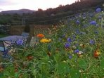 Sunset over the bank of wildflowers.