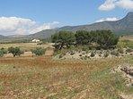 view to casa Estrella from surrounding poppy field