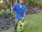 Eduardo with Primitivo Bananas