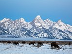 The Grand Tetons, and the ever-present Bison,