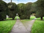 The famous yew trees!