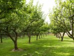 Fowberry Tower Orchard