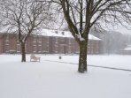 The gardens in the snow
