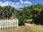 Casas de la Playa Central garden where Sea Grape is one of five cottages