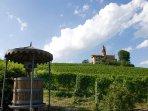 property vineyards