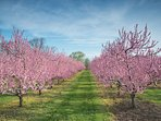 Local Orchard
