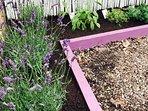Herbs corner in the garden