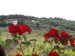 6 bedroom Villa in San Donato in Collina, Tuscany, Italy : ref 5241561