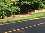 The deer visit often, but don't pay rent.  We hope you'll enjoy seeing them!