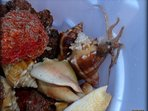 all sorts of surprises among the sea shells, great snorkeling and photo opportunities...