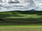Gorgeous photo ops, this one has Steptoe Butte in the back, you can hike it or drive to the top