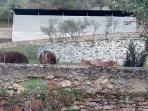 Nuestras vecinas las vacas