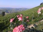 Vista sulle vigne di pregiata Barbera, dichiarate patrimonio Unesco dal 2014.