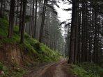 village vandal road- great place for run / biking