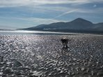 The beach at Murlough