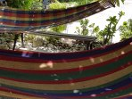 Private area on the property to chill in hammocks under the fruit tree.