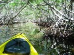 Take your own eco-tour from our ramp. visit leffis key mangrove tunnel