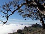 Fog over Albury