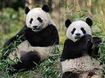 Le Zoo de Beauval à 30 minutes du gîte