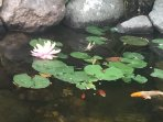 Fish and lily pads! Fun for ALL!