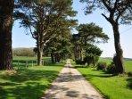 albero privato viale che conduce alle proprietà