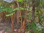 This home offers easy access to Hawaii Volcanoes National Park, Volcano Village, and Punaluu Black Sand Beach!