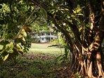 Extensive tropical gardens